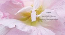 Invitation to Beauty_Interior 19